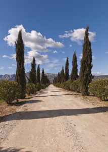 The Driveway to a Vineyard, Provence, France